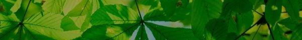 leaf-bg-dark
